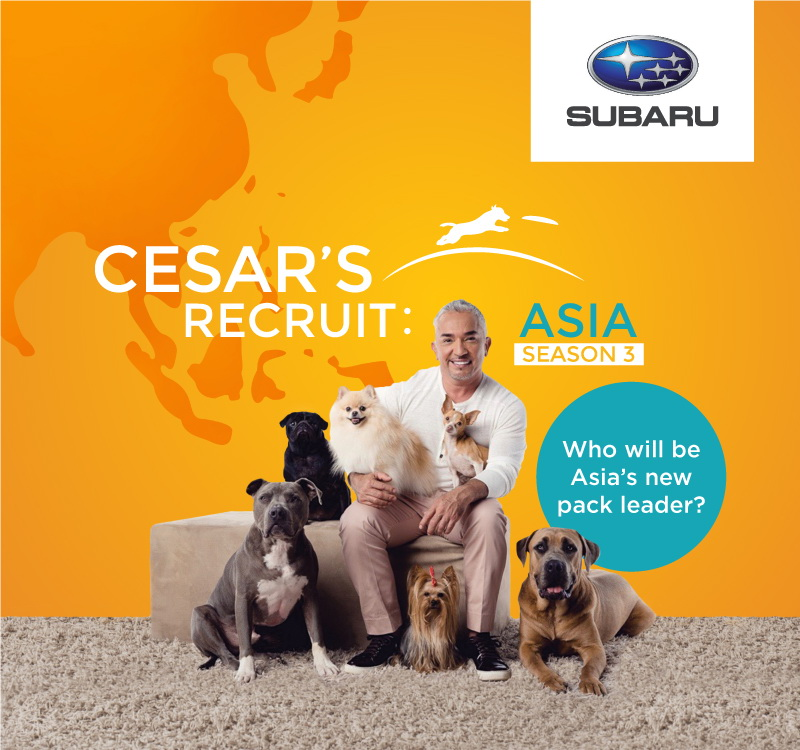 """ซีซาร์ มิลลาน กลับมาอีกครั้งเพื่อเฟ้นหาจ่าฝูงคนใหม่ของทวีปเอเชีย กับซีซั่นที่ 3 ของรายการ """"ซีซาร์ รีครูท เอเชีย"""" (Cesar's Recruit Asia) ทดสอบความแข็งแกร่งของสุดยอดนักฝึกสุนัข"""