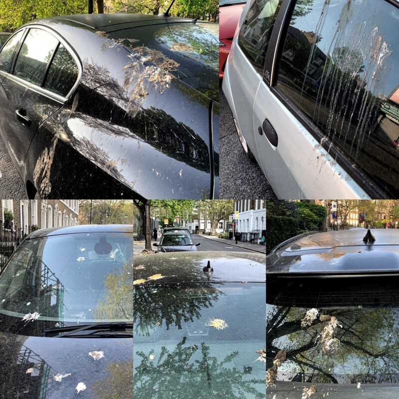 How Artificial Bird Poop Keeps Your Paintwork Safe in the Real World (1)